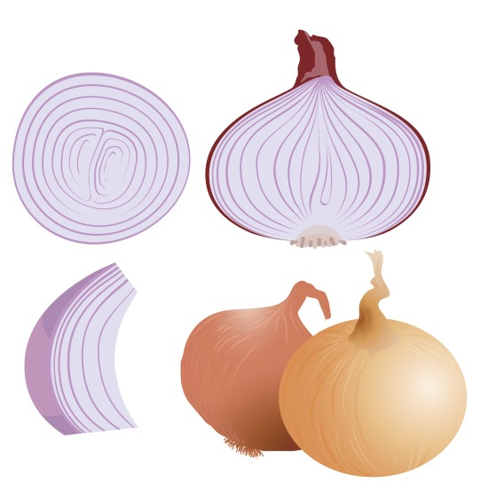 Red onion Allium cepa is a homeopathic remedy for flu and allergies
